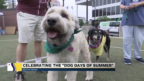 First Fridays hosted event for animals in South Bend on Friday
