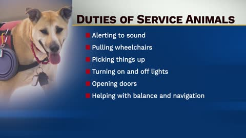 Here's what the law says about service animals and their handlers