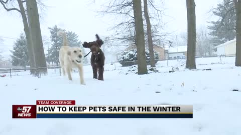Pets safety at risk in frigid temperatures