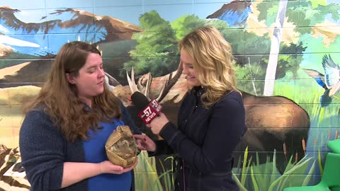 Potawatomi Zoo looking for volunteers