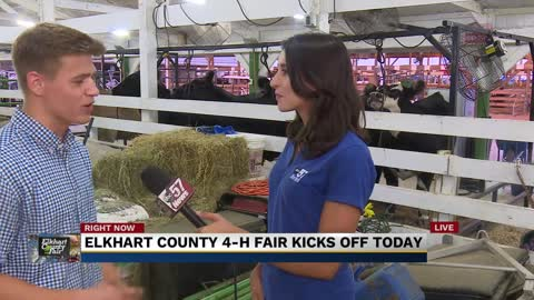 Showing animals at Elkhart County 4-H Fair
