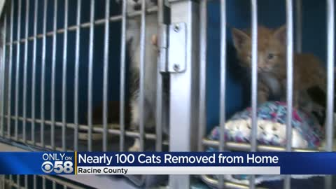 Nearly 100 cats removed from 'uninhabitable conditions' inside Racine County home