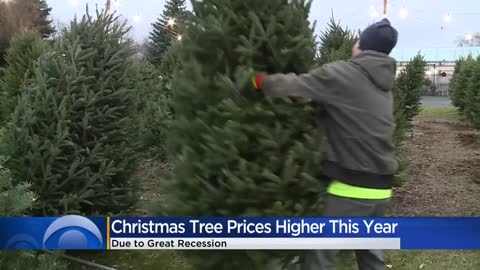 Demand for real Christmas trees still high despite another price hike this year