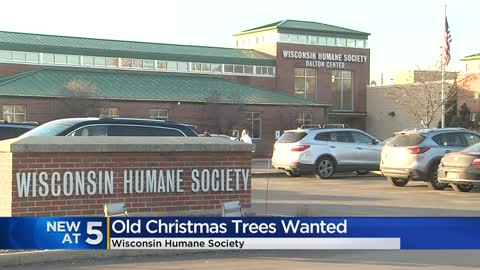 Wildlife rehabilitation centers want your old Christmas trees