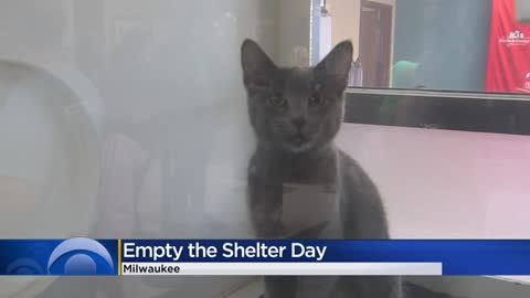 MADACC adopts out 75 cats, 15 dogs during 'Empty the Shelter' event