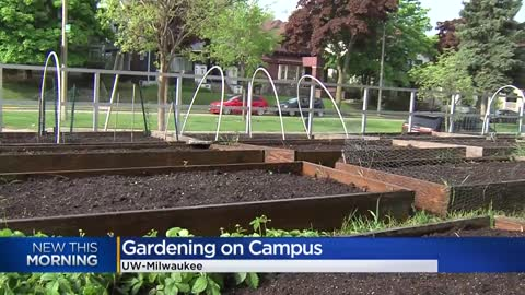 "UW-Milwaukee's gardens help students who are ""food insecure,""..."
