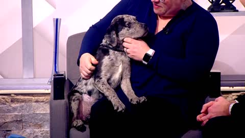 Pet of the Week: 3-month-old puppy Guernsey