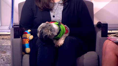 Pet of the Week: 4-year-old dog Joy