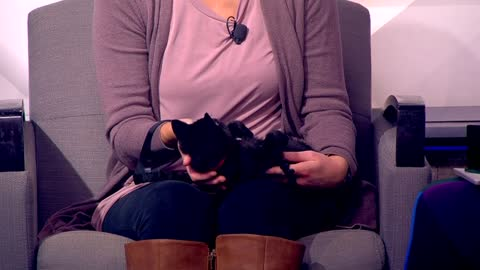 Pet of the Week: 3-month-old kitten Joy