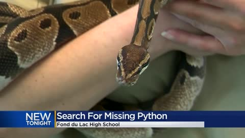The python loose in Fond du Lac High School has been found
