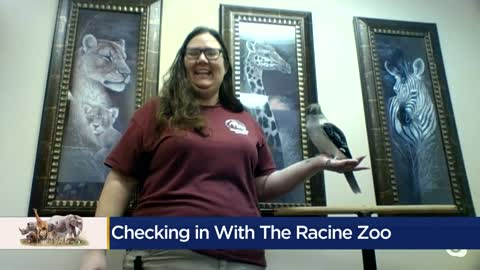 Racine Zoo discusses impact closures are having on facilities,...