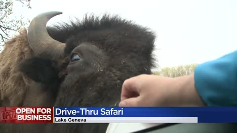 Safari Lake Geneva opens drive-thru experience to continue social distancing