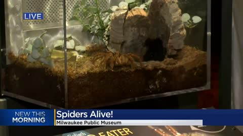 "No need to be antsy about spiders! Go see ""Spiders Alive!"" at the Milwaukee Public Museum 🕷️"