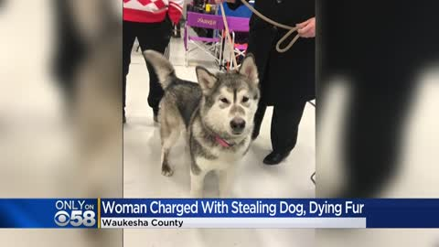 Officials: Woman stole puppy from Sussex kennel, dyed its fur to disguise it