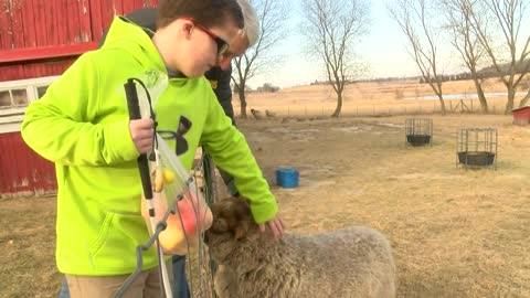 Jefferson County lamb inspires children's book for the blind