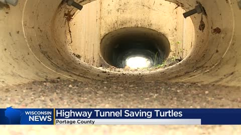 Tunnel system on Portage County highway helps to save turtles