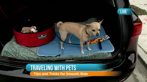 Safe Travel Tips for Pets: Part 2