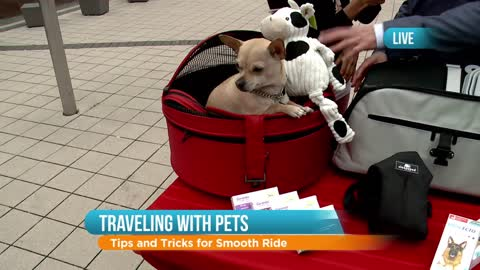 Safe Travel Tips for Pets: Part 1