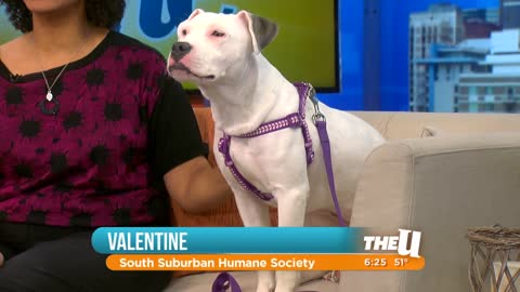 Rescue Dog: Meet Valentine